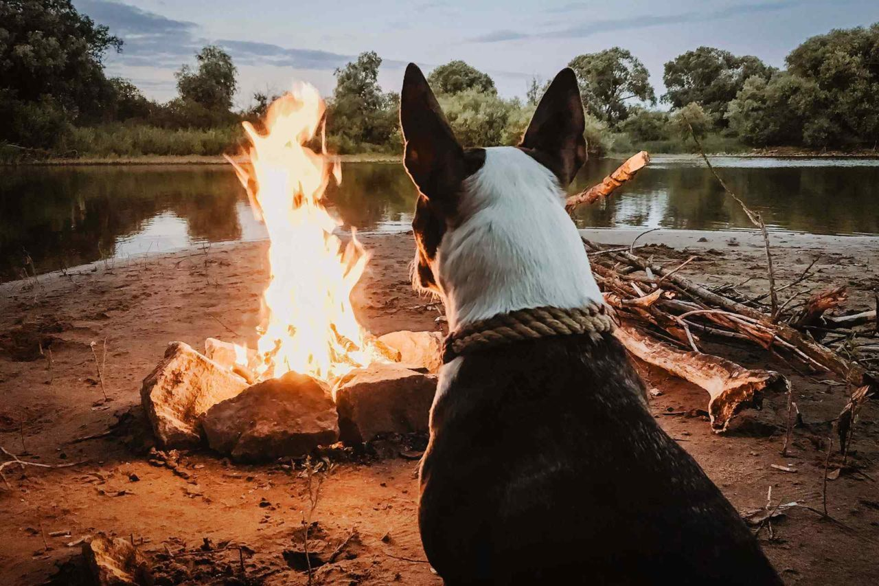 http://radiocielo.com.pe/wp-content/uploads/2017/04/dog_camping-1280x853.jpg