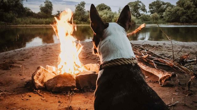 http://radiocielo.com.pe/wp-content/uploads/2017/04/dog_camping-640x360.jpg
